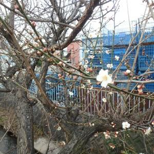 春が少し近づいて・・・(お彼岸までのお仕事について。)